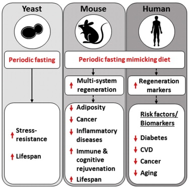 C:\Users\doctor.PCM\Desktop\Clinic\Recent images\fasting and gut flora.jpg