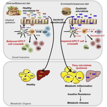 gut flora and metab.jpg